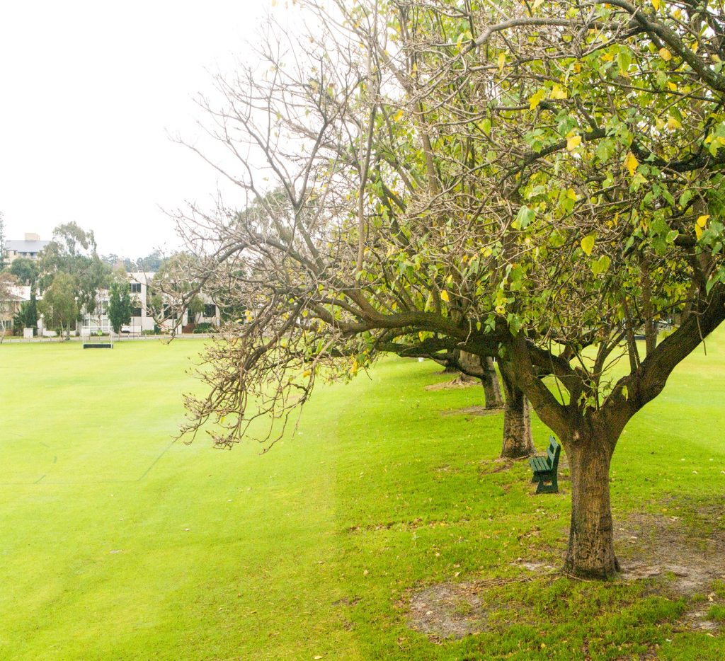 Park with tree